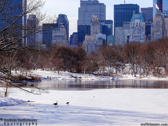 steffelmaier_central park in winter_tn